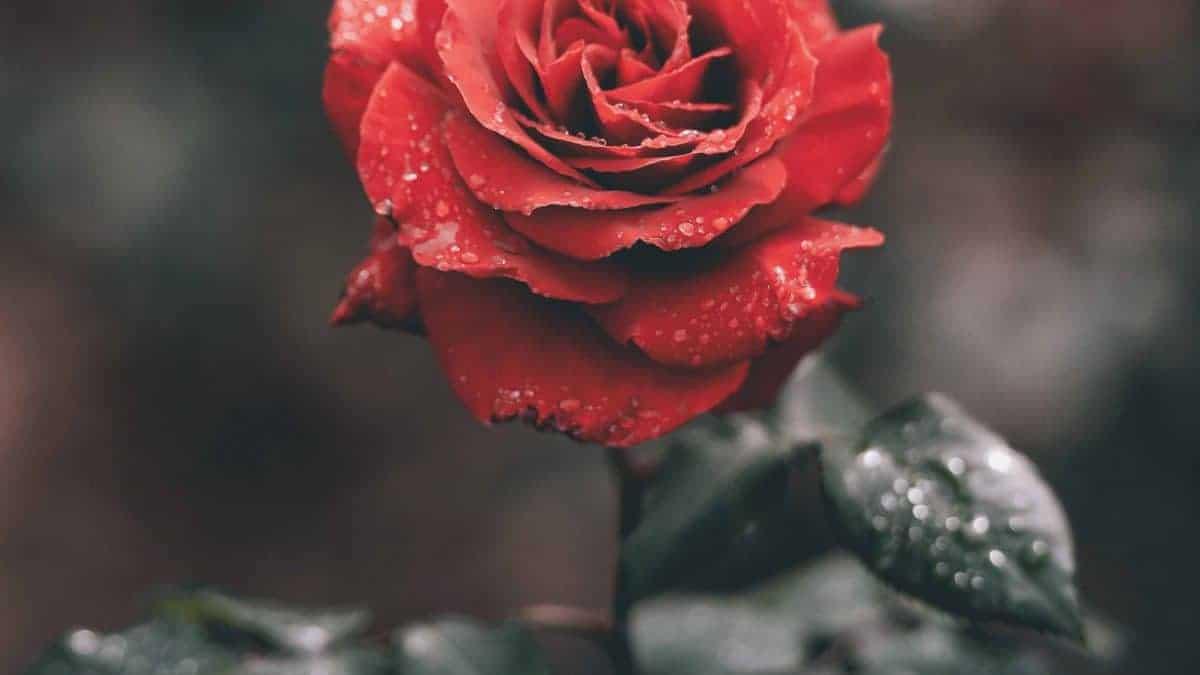 HUE詼-花藝測驗|花藝設計、乾燥花束